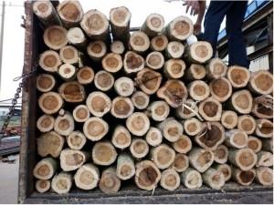 quy trình sản xuất gỗ