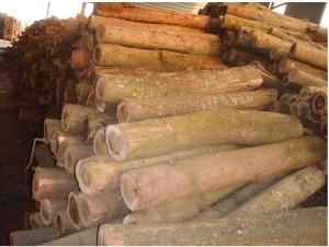 Nguyên liệu gỗ tự nhiên